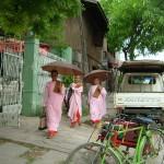 Burmese Pink Nuns