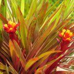 Kauai Flora