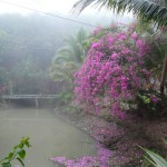 BP Sacred Garden