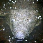 croc protector